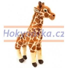 Plyšová Žirafa 55cm